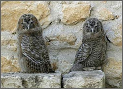 Owls of the Fortress Monastery of Santo Spirito, Castle Hotel in L'Aquila